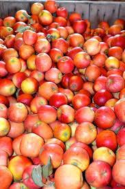 Apple Pumpkin Picking Syracuse Ny by Beak U0026 Skiff Apple Orchards Autumn Pinterest Apple Orchard