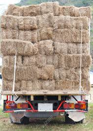 Hay Truck For Cow Feeding Stock Photo, Picture And Royalty Free ... Hay Truck Stock Photos Images Alamy My 63 Chevy Hauling Hay Trucks Hay Hauler Loading Time Lapse Youtube Gmc Diesel Dairyland Co 24 Truck And Trailer In Flickr Australian Trucking On Twitter The Volvotrucks Ata Safety 5jp Ranch Life Page 6 Delivering To Market At Tenerir The Atlas Mountains Pinterest Overloaded In West Coast Of Turkey Image Farm With Family Help Men Riding Full