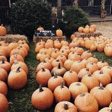 Chatham Kent Pumpkin Patches by Top 10 Things To Do With Your Friends This Fall Her Campus