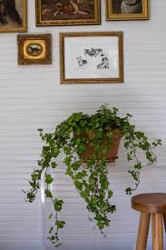 Grow Lamps For House Plants by Best Houseplants 9 Indoor Plants For Low Light Gardenista