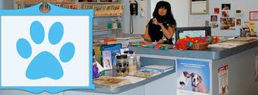 lombard animal hospital contact lombard animal clinic pc gentle caring veterinary