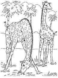 Coloring Book Pages Animals Giraffe