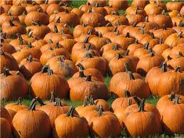 Jt Pumpkin Patch Lincoln Ne by Ciliving Community Calendar Illinoishomepage