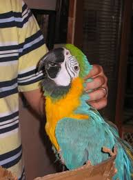 Parrot Caught Singing Bodies Hit The Floor by 3 Ways To Lose Your Parrot U0027s Trust