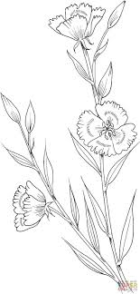 Tulip Coloring Pages Select From 27371 Printable Of Cartoons Animals Nature Bible And Many More