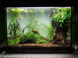 Click The Image To Open In Full Size. | Aqua | Pinterest ... Images Tagged With Aquascape On Instagram Aquatic Eden Aquascaping Aquarium Blog Aquascape Pinterest How Much Does It Cost To Run A Fish Tank Tropical Site 20 Of The Most Beautiful Places On Planet This Is Why You Can Natural Httpwwwokeanosgrombgwpcoentuploads2012 Takashi Amano Creator Of The Nature Love Aquascapenl Twitter Hardscape Axolotl Fish And Aquariums Planted Red Green By Adrian Nicolae Design