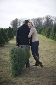 Canaan Fir Christmas Tree Needle Retention by 218 Best Christmas Tree Lot Images On Pinterest Christmas Tree