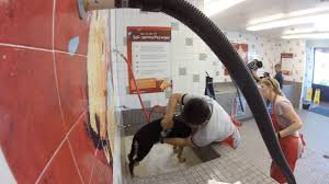Petco Dog Shedding Blade by German Shepherd Bathing At Pet Food Express Dog Wash Self Service