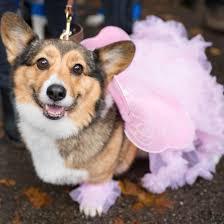 Tompkins Square Halloween Dog Parade by Halloween Martha Stewart