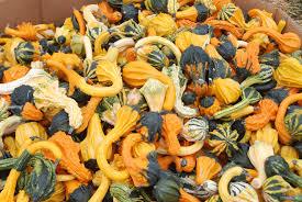 Wv Pumpkin Festival Milton Wv by India Ink Colors Of West Virginia Orange