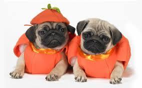 Pug Pumpkin Stencil Printable by Cute Dog Halloween Sayings U2013 Halloween Wizard