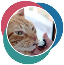 cat dental care pet dental care why it s so important