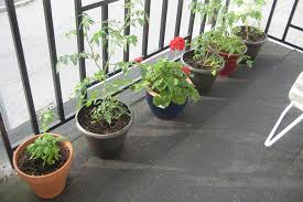 Simple And Easy Small Balcony Garden Design Ideas Planted With Vegetable Flowers In The Pots