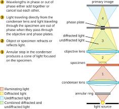 2 3 Instruments of Microscopy Biology LibreTexts