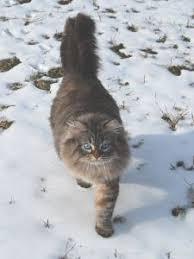 russian cat names the 200 top russian cat names cat names city