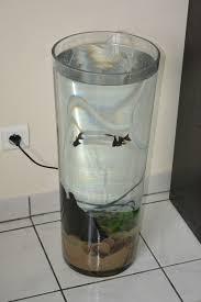 aquarium original pas cher poisson naturel