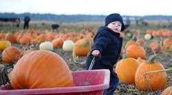 Best Pumpkin Patch Snohomish County by Washington State Pumpkin Patches Corn Mazes Hayrides And More
