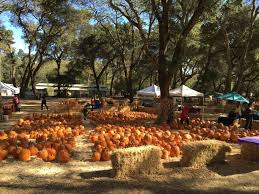 Half Moon Bay Pumpkin Patches 2015 by Silicon Valley Toddler And Beyond Seasonal Fun The Woodside