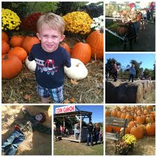 Pumpkin Patches In Arkansas by Corn Mazes And Pumpkin Patches Only In Arkansas