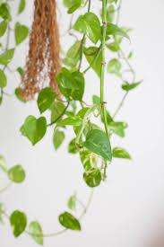 für ein besseres raumklima die richtigen pflanzen fürs