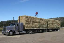 Calliope Wholesale Hay & Feeds - Want A Load Of Hay Full Truckload One Full Truck Load Of 26 Pallets Mixed Various Stock To Vlc Bv Logistics The Way Its Meant To Be Services Ls2c Ltl Shipping Service Fulltruck Load River Oaks Couriers Truck Load Of Dirt Earthtec Projects Transportation Amerasia Line Nsr Evrasiaground Transportation Truckload Shipping Hlight Group Companies Trucking Svat