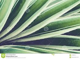 100 Natural Geometry Cactus Aloe Vera Closeup Floral Background The