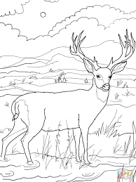 Deer Coloring Pages Mule Buck Page Free Printable To Print