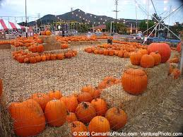 Mission Valley Pumpkin Patch by Ventura County Business Directory Listing Blog History