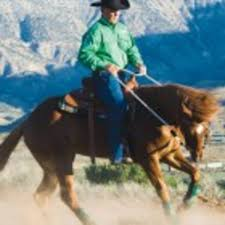 Control Your Energetic Horse Expert Advice On Horse Care And Horse