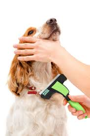 Horse Hair Shedding Blade by 26 Best Best Dog Brushes Images On Pinterest Brushes Best Dogs