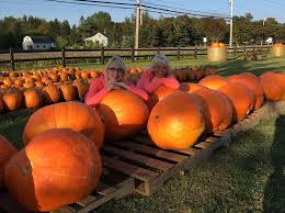 Jerry Smith Pumpkin Farm Babies And Berries by Balderston U0027s Farm Market 536 Photos 36 Reviews Farmers
