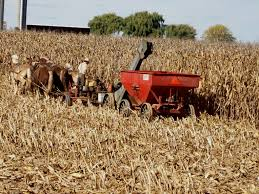 Pumpkin Patch Picking Lancaster Pa by Stable Days A Visit To Amish Country Lancaster Pa