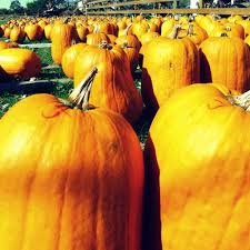 Highwood Pumpkin Festival 2017 by Von Bergen U0027s Pumpkin Farm Hebron Little Lake County