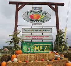 Sauvies Island Pumpkin Patch Corn Maze by The Pumpkin Patch Sauvie Island Portland Or