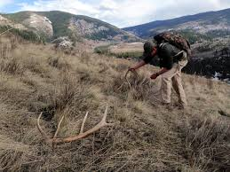Deer Antler Shed Hunting by Jay Scott Outdoors Shed Hunting