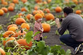 Napa Pumpkin Patch Hours by Pumpkin Patches In Sonoma County
