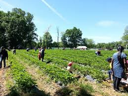 Pumpkin Picking In Freehold Nj by Wemrock Orchards Pumpkin Patch U0026 Corn Maze New Jersey Haunted Houses