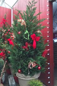 Best Variety Of Christmas Tree by Photos Best Local Options For Living Christmas Trees Nooga Com
