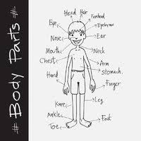 Human Body Coloring Pages Printable
