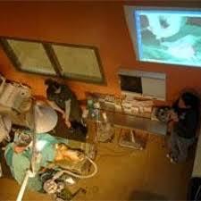 Teens Screen Live Animal Surgery News Azdailysuncom