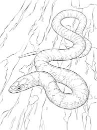 Online Snake Coloring Pages 38730