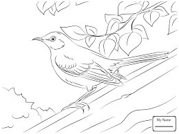 Coloring Pages Mockingbird And Iris Tennessee State Bird Flower Birds