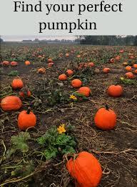 Best Pumpkin Patches Near Milwaukee by Barthel Fruit Farm Home Facebook