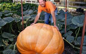 Cal Poly Pumpkin Patch San Luis Obispo by How To Grow Giant Pumpkins Advice From Two Slo County Growers