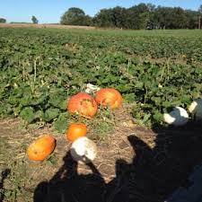 Pumpkin Patch Fort Collins by Schaake Pumpkin Patch 11 Reviews Farmers Market 1791 N