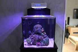 aquarium nano eau de mer nano blenny mon premier aquarium eau de mer 1 4