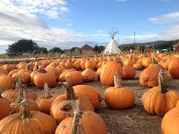 Half Moon Bay Pumpkin Patch Ca by Pumpkin Patches In The Bay Area Interactive Map