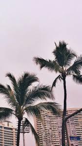 Palm Trees Tumblr 3 E
