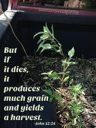 100 Seedling Truck Heartprints Of God When Death Multiplies Life
