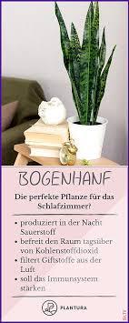 pflanzen im schlafzimmer vor und nachteile und geeignete